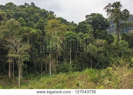 Deforestation environmental problem, rain forest destroyed for oil palm plantations