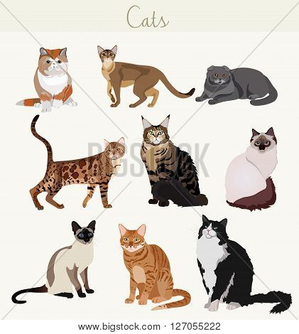 Vector Breed cats in different poses. Cartoon highly detailed pets