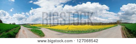 Canola field in bloom in British Columbia