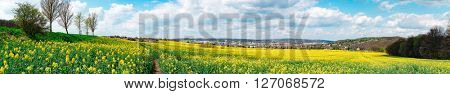 Beautiful spring panoramic shot with a harvest meadow and shining sun