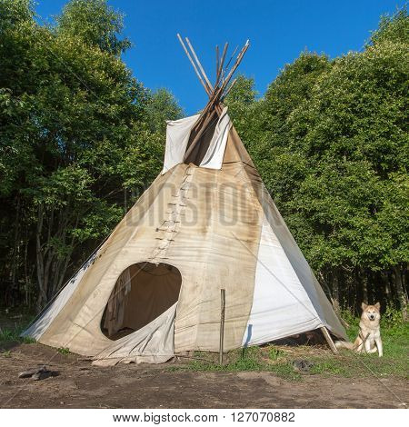 A single, solitary teepee in a forest. Tepees were traditional housing for Native Americans in Great Plains and other Western states.