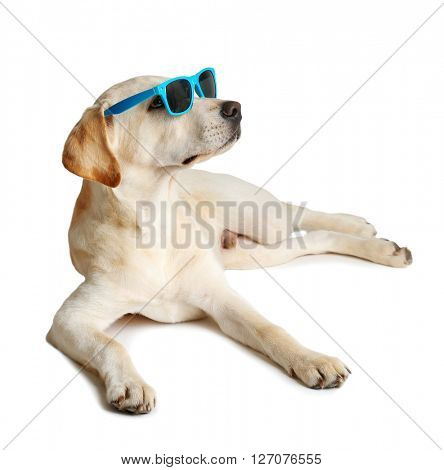 Cute Labrador dog with sunglasses isolated on white