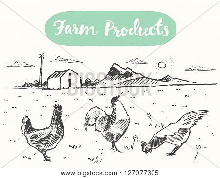 Hand drawn illustration of a free range chicken, farm fresh chicken meat, vector illustration, sketch