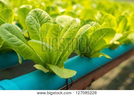 The Organic Vegetable Farm.