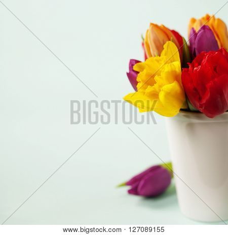 Spring flowers over blue background
