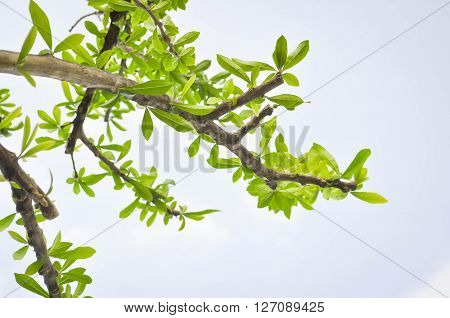Ground Tree and sky in blur background