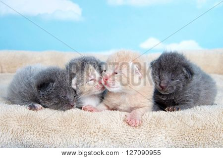 four one week old kittens eyes still mostly closed laying together on a tan fuzzy bed lined up side by side with blue sky cloud background