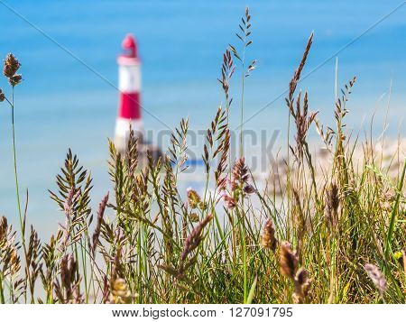 Wild flowers and Beachy Head Lighthouse as blured background. Eastbourne East Sussex England. Selective focus