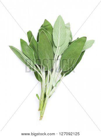 Fresh garden sage herb. Isolated on white background