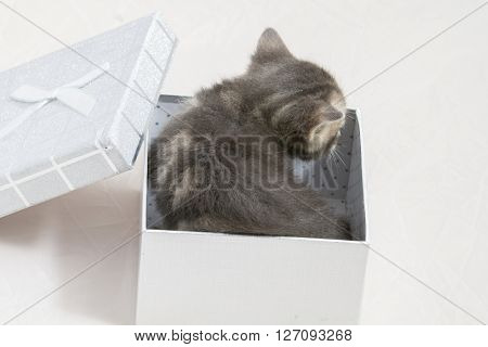 kitty, small kitten stuck in a gift box, cuddly animal sweet face