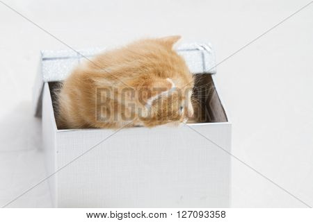 adorable, small kitten stuck in a gift box, cuddly animal sweet face