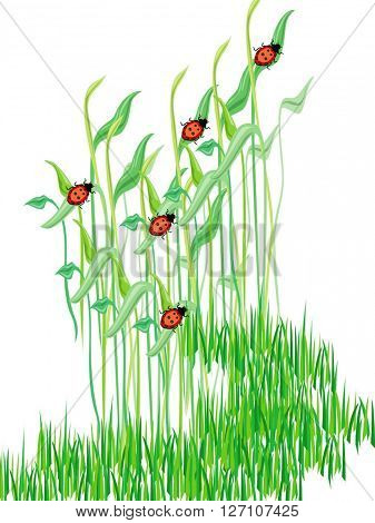 graph of ladybirds set on blades of grass
