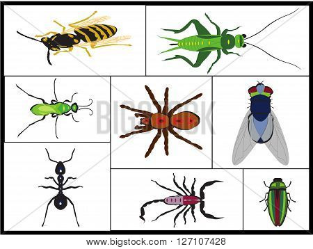 photomontage representing various insects isolated on a white background