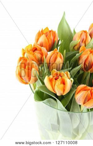 Close-up of a beautiful bouquet of orange tulips in a glass vase. Isolated on white background