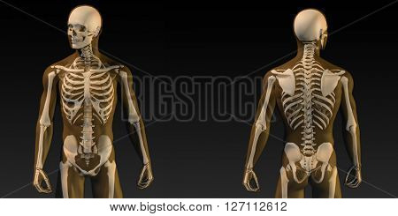 Human Anatomy with Visible Skeleton and Muscles Art 3D Illustration Render