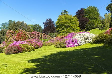 landscape of gardens with trees and flowers of azalea in spring season blue sky in background