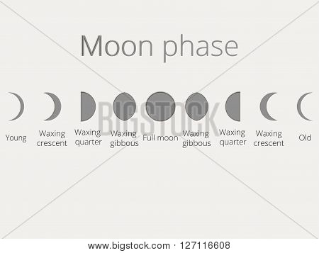 The phases of the moon Vector illustration. The whole cycle from new moon to full.
