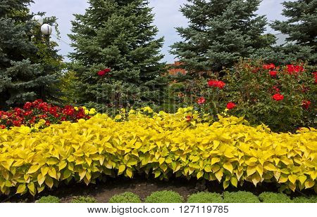 Flowerbed in resort park - ornament and pride of Kislovodsk,Caucasus, Russia
