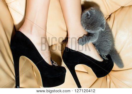 Kitten And Female Legs
