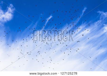 Flock of birds in the sky clouds a sunny day. Nature background abstract