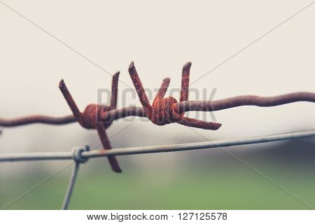 rusty barbwire macro - barbed wire closeup