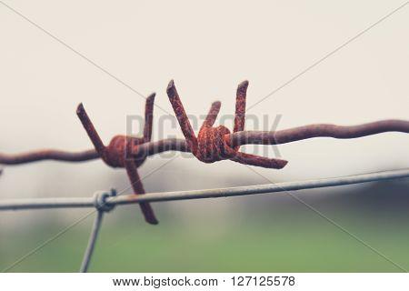 rusty barbwire macro - barbed wire closeup