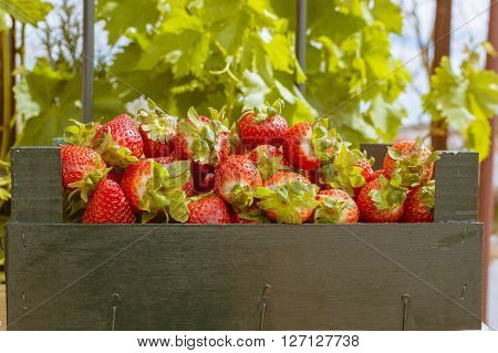 strawberries in wooden box, strawberries in the field