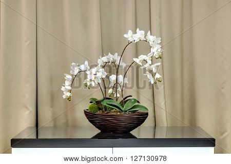 flowers in a pot stand on a table about a window with curtains