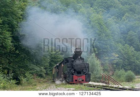Running wood-burning locomotive of Mocanita (Maramures Romania). Old train is situated against green forest background.