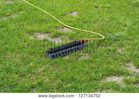 Irrigation of lawns. Irrigation systems the young grass.