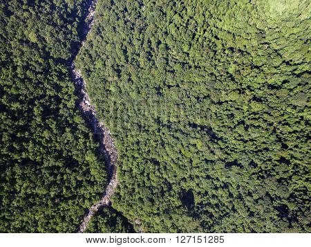 Top View of Pathway in a Rainforest, Brazil