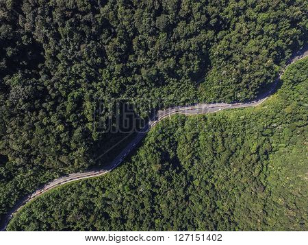 Top View of Highway in a Forest