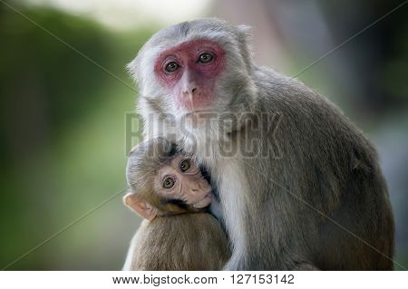 monkey with a baby sucking her breasts ** Note: Visible grain at 100%, best at smaller sizes