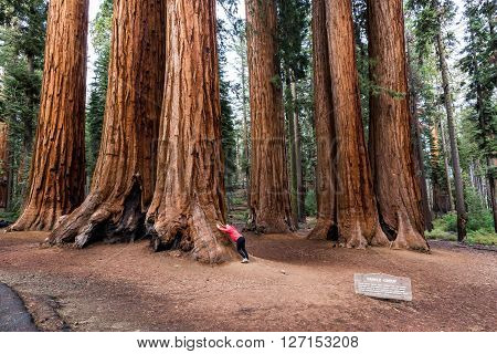 View of a girl in Sequoia National Park
