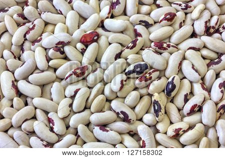 Colorful haricot beans background close up view