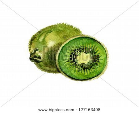 Watercolor summer insulated kiwi on white background