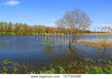 flooded tree near lake shore in forest