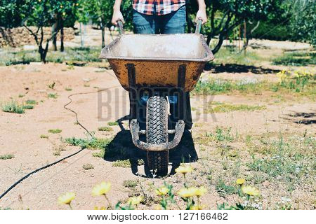 closeup of a young farmer man wearing a plaid shirt pushing a wheelbarrow in an organic orchard