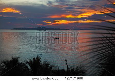 Palm trees silhouette at sunset Pattaya Thailand