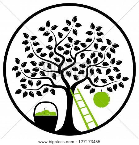 vector apple tree with one big apple, basket of apples and ladder in round isolated on white background