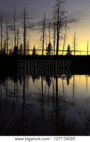 Small pond after sunset, Yellowstone National Park, Wyoming