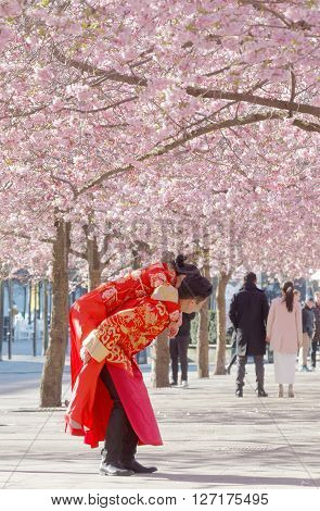 STOCKHOLM SWEDEN - APRIL 23 2016: Asian couple in traditional red and golden clothes in the beautiful park full off pink cherry bloom in Kungstradgarden in central Stockholm The man lifting the woman up on his back