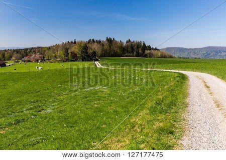 Meadow On Mountain Heitersberg, Near Zurich