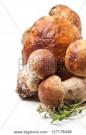 Cep Mushrooms