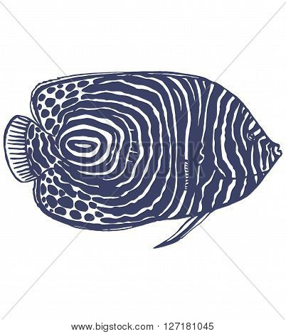 vector hand-drawn graphic illustration of emperor angelfish