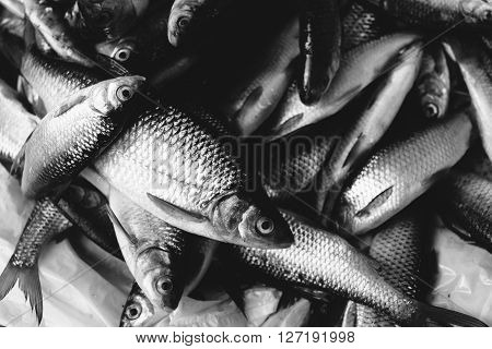 Many fish caught in the market. Black and white photo.