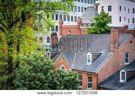 View Of Trees And Buildings In Downtown Baltimore, Maryland.