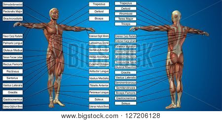 Concept or conceptual 3D human man anatomy and muscle for sport and text on blue background