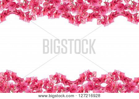 Bougainvillea frame on white background Provincial flower of phuket thailand