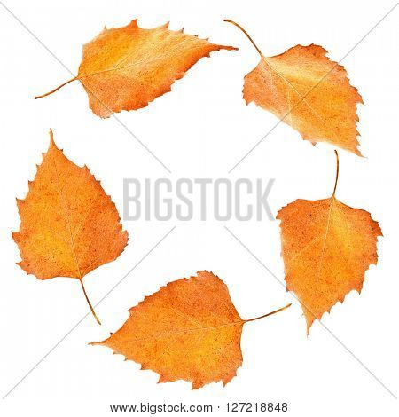 Autumn poplar leaves shaped as round frame isolated on white
